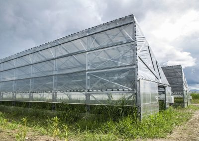 Greenhouses011