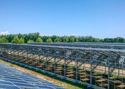 Greenhouses043
