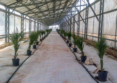 Greenhouses065